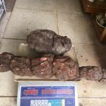 Củ hà thủ ô nặng trên 2kg giá 200k/kg
