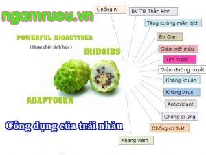 tác dụng của trái nhàu