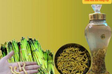 Mùa sâu chít Điện Biên mùa 2017 – 2018 và giá bán sâu chít tại shop Rừng Vàng
