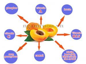 thành phần dinh dưỡng trong quả mơ