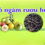 Các đồ ngâm rươu có nguồn gốc thảo dược hoa quả tốt cho sức khỏe