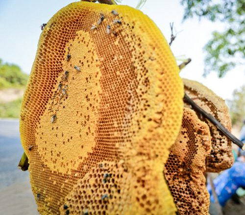 Sáp ong ngâm rượu rất bổ dưỡng