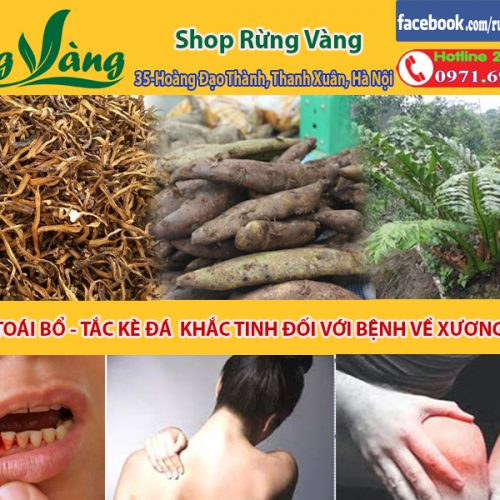 tác dụng tuyệt vời của rễ củ cốt toái bổ hay tắc kè đá đối với bệnh về xương khớp