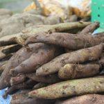 Những bài thuốc chữa bệnh cực hiệu quả từ rễ (củ) Cốt toái bổ hay tắc kè đá