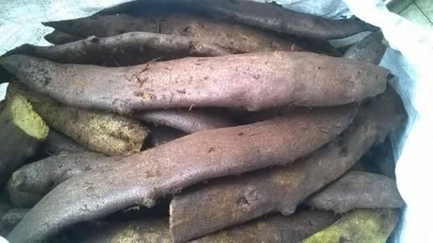 hình ảnh rễ cốt toái bổ hay rễ tắc kè đá tươi