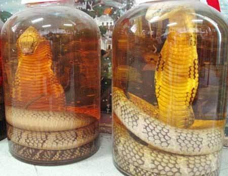 Rượu rắn dùng để xoa bóp làm giảm đau xương khớp
