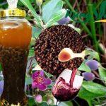 Cách ngâm rượu sim với mật ong thơm ngon không ngờ chỉ bằng 2 cách này!