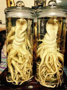 Đinh lăng điêu khắc rắn hổ mang