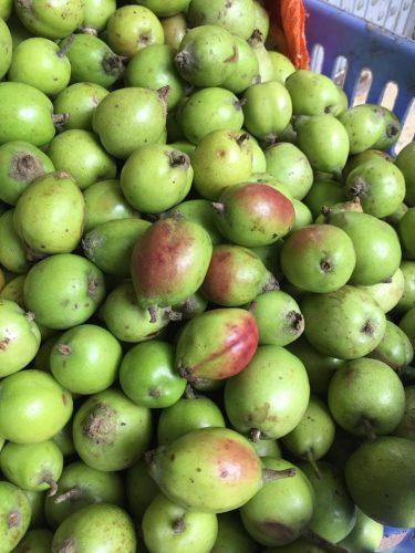 Trái táo mèo đầu mùa