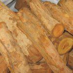 Tác dụng thần kỳ của cây mật gấu trong hỗ trợ điều trị bệnh