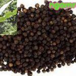 công dụng của chuối hột rừng bài thuốc giá rẻ tốt cho sức khỏe