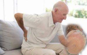 tầm gửi nghiến hỗ trợ điều trị đau lưng