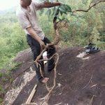 Hình ảnh khai thác sâm xuyên đá
