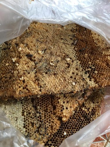 sáp ong chứa bọng mật
