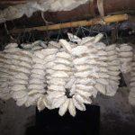 bảo quản cao ráo hanh khô