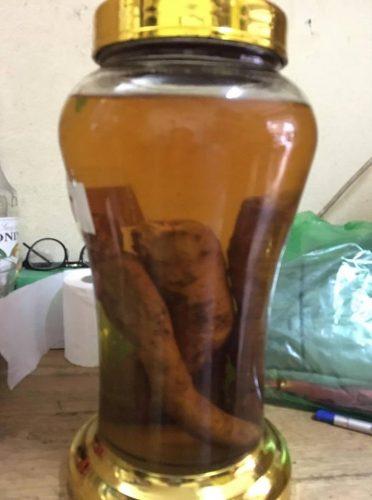bình rượu sâm bố chính sau 3 tháng ngâm ra màu vàng nâu rất đẹp