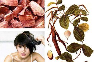 Cách trị tóc bạc sớm bằng Hà Thủ Ô Đỏ hiệu quả nhanh chóng ngay tại nhà