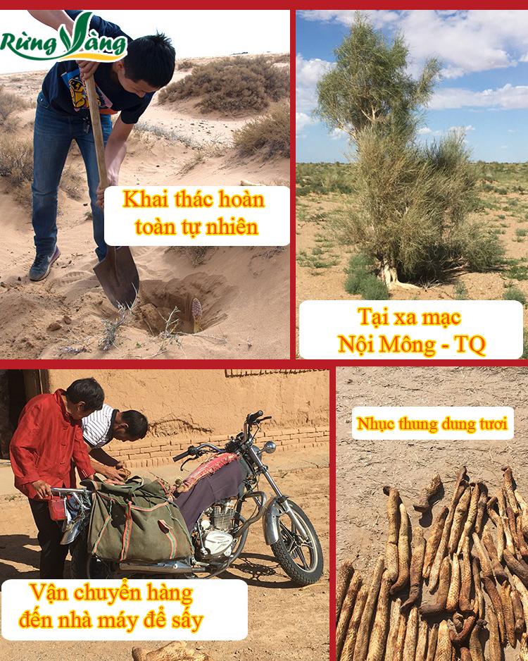 Hình ảnh khai thác nhục thung dung Nội Mông