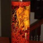 Tác dụng của rượu câu kỷ tử – tiên dược bổ khí